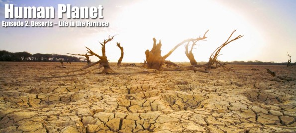 Episode-2-Deserts-–-Life-in-the-Furnace